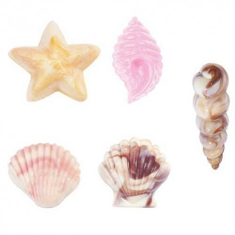 Molde Conchas de mar